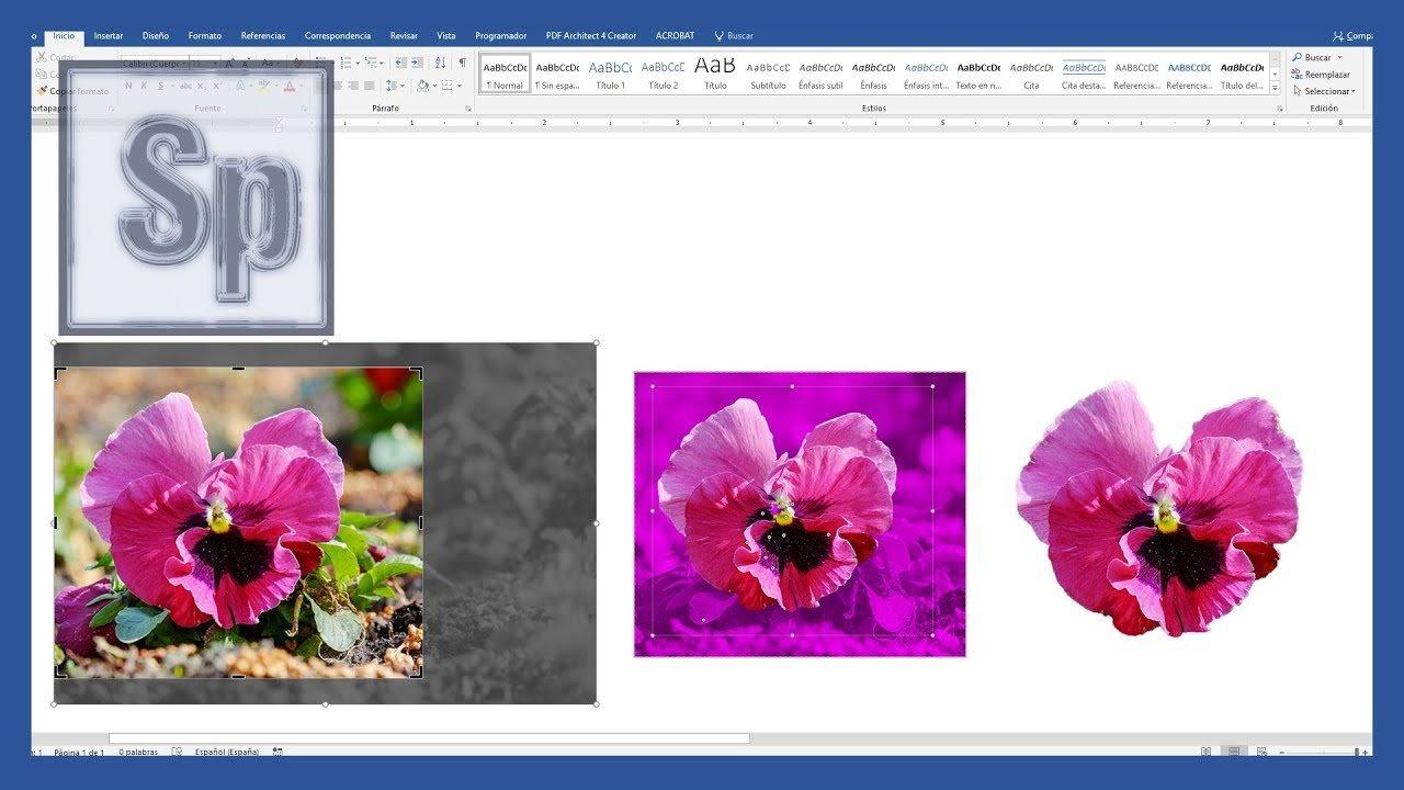 Recortar imágenes y quitar el fondo en Word